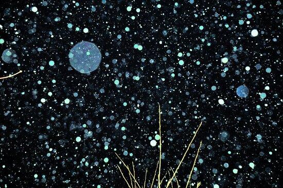 Sapporo, Nhật Bản: 降雪 Kosetsu ー Snowfall (1)