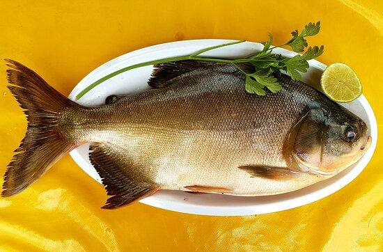 Rochedo, MS: Venha saborear uma deliciosa refeição à base de pescado!  Porção completa (serve duas pessoas): # Costelinha de pescado # Arroz # Vinagrete # Pirão # Molho Temos pousada familiar ou para grupo de amigos! LIGUE 9 9648 3564