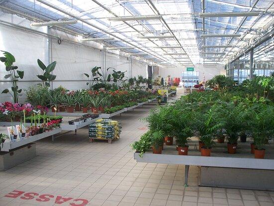 Vivaio Obiettivo Garden
