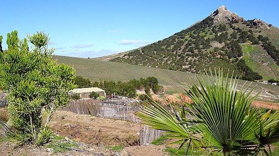 Die Adega liegt eingeschmiegt in die Landschaft - der Pico da Ana Ferreira dominiert die Umgebung.