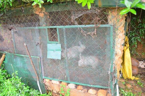 Rose Gardens - Bunnies!