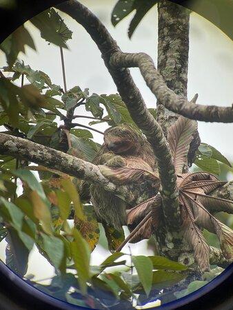 Sloth sighting