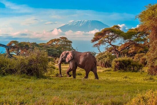 Full-Day Private Amboseli National Park...