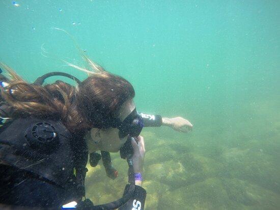 Mergulho em Bombinhas Turistico e Consciente