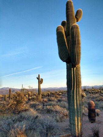 Sonoran Desert Jeep Tour at Sunset Photo