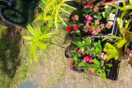 Paita, New Caledonia: ╭🌳🌳 ⒼⓇⒺⒺⓃ ⒽⓄⓊⓈⒺ 🌳🌳╮ 🄱 🄴 🄴 🄵  ▫ 🄵 🄴 🅂 🅃 🄸 🅅 🄰 🄻 ▫▫  𝙋𝘼𝙄𝙏𝘼 𝙑𝙄𝙇𝙇𝘼𝙂𝙀 ╭❆❆╮ 𝙉𝙀𝙒 𝘾𝘼𝙇𝙀𝘿𝙊𝙉𝙄𝘼𝙉  𝘾𝙪𝙡𝙩𝙪𝙧𝙖𝙡 𝙃𝙚𝙧𝙞𝙩𝙖𝙜𝙚   🌳🌳╮