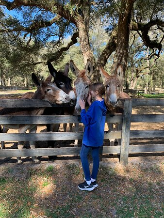 Gypsy Gold Horse Farm Tour with Entry Ticket: Horses, Mules and More!!