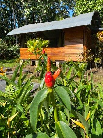 Barra de Pacuare, Costa Rica: Nuestro bungalow