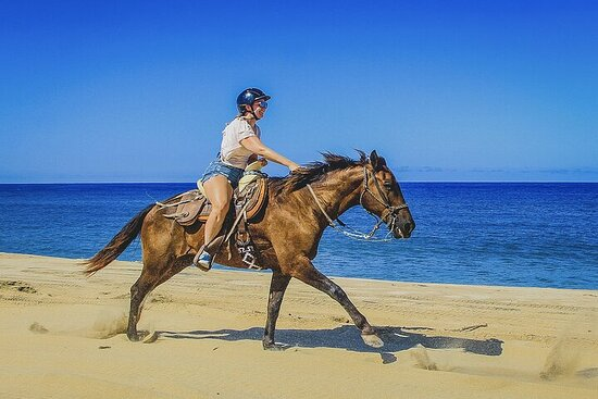 Фотография Cabo San Lucas Horseback Beach Ride: Intermediate and Advanced Levels