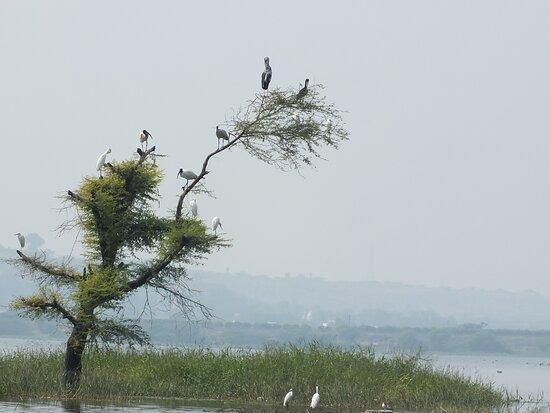 Bhigwan bird sanctuary