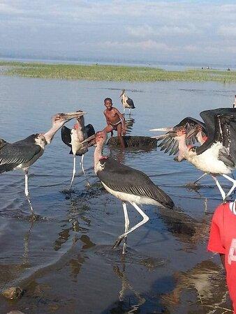 Awasa Lake South Ethiopia