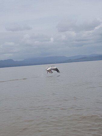 LakeTana ,Bahir Dar ,North Ethiopia