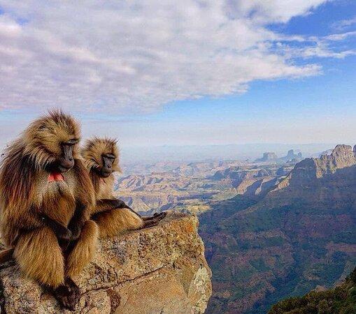 Simien Mountain NatinalPpark ,Gondar ,North Ethiopia