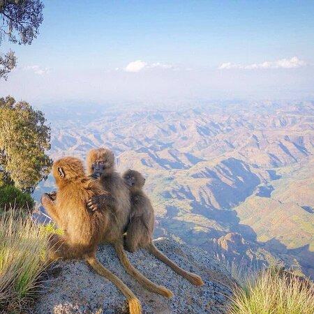 Simien Mountain Debark north Ethiopia