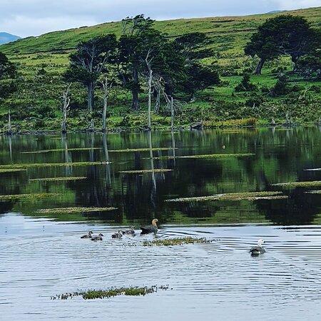 Isla Navarino, Chile: The Laguna Zañartu, Navarino Island  Chile. Worth visiting!😁😍