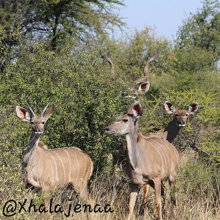 Serowe, Botswana: Guided Game walks are available with our friendly Scouts