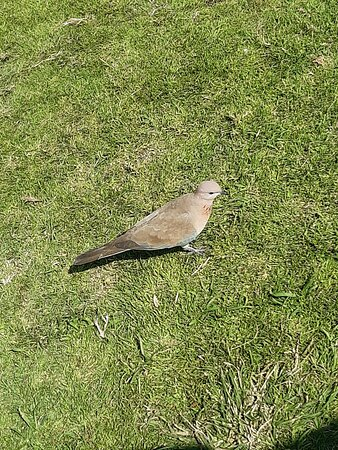 Chirping birds at park green meadows