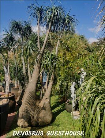 Kathu, Nam Phi: Garden Devosrus B & B