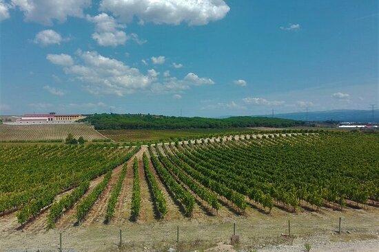 Route du vin de Bairrada et expérience gastronomique