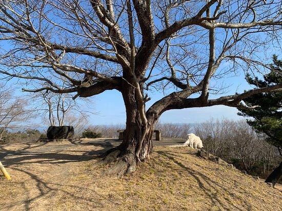 Fujinyama Natural Park