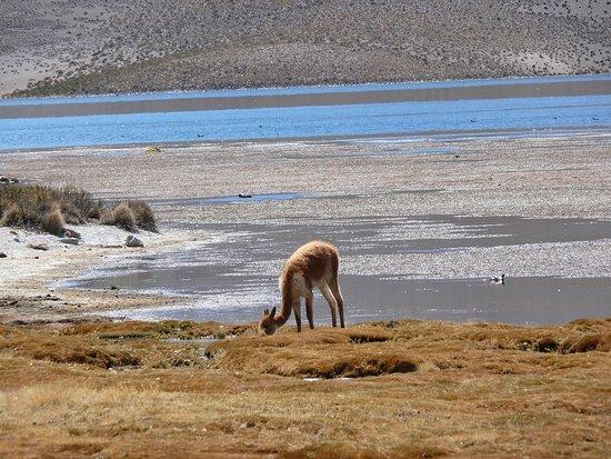 Putre, Chile: Lago Chungara-Cile