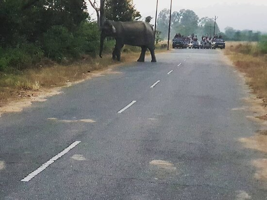 Jim Corbett National Park, Ấn Độ: We had 2 nights visit at Jim Corbett. We did back to back 3 safaris and got lucky to spot the tiger. Do visit YouTube video for whole jungle drama and spotting !  https://youtu.be/5mHz5oskLxk