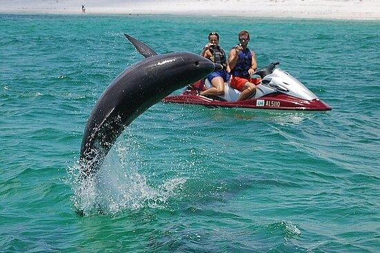 Avistamiento de delfines Aventura en moto acuática