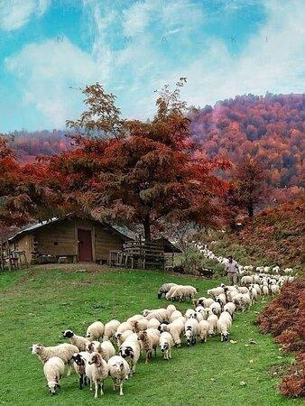 Masuleh, Iran: ❤️🌹 Iran 🇮🇷 😍