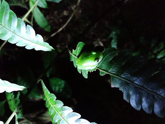 EcoPoro Rain Forest