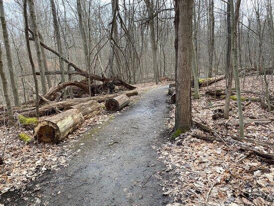 Pine Grove Trail