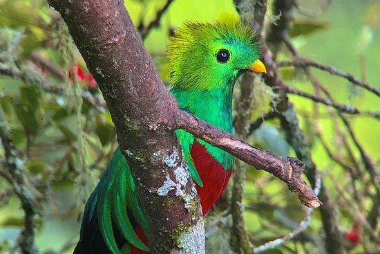 Quetzal Birdwatching Experience at San Gerardo De Dota Group Tour.