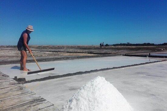 Figueira da Foz par rizières et salines