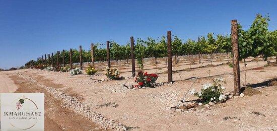 Stampriet, Namibia: Vineyards