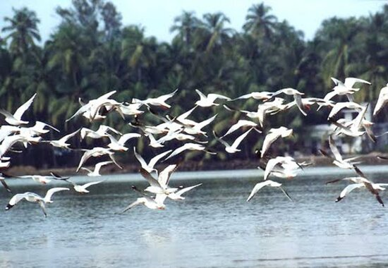 Kadalundi Bird Sanctuary Kadalundi Bird Sanctuary covers an area of 3 km, surrounded by hillocks and provides a splendid view of the river mouth and the sea. It is home to hundreds of native and migratory birds. Vallikkunnu estuary (river mouth) is a paradise for thousands of verities of migratory birds which come every year for breeding and reproduction. They feed on the small fishes and insects on the marshy area under mangroves. These birds come from different parts of the world including the