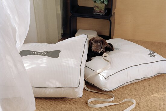 The Westin Heavenly Dog Bed