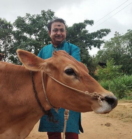 Bangalore District, India: Garuda Purana, Upanishads, Jyothisha Shastra, Brahmanda Purana and many scriptures have stressed on the many benefits of GoSeva (Serving the Cow).The cow is considered the most holy animal as it has all the 365 Gods, 9 Grahas, 12 Rashis & 27 Nakshatras residing in it. Even Lord Sri Krishna has described GoSeva in great detail in Brindavana. Scriptures also mention that Go Daana (donating a cow) is equivalent to performing an Ashwamedha Yagna.