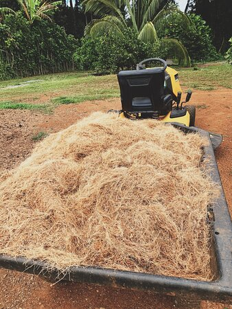 Shredded coconut coir. We up-cycle spent  coconut husks & shells into premium planting material.