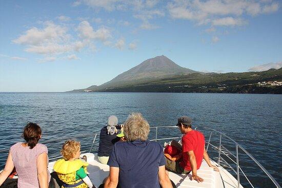 Observation des baleines et des dauphins sur l'île de Pico...