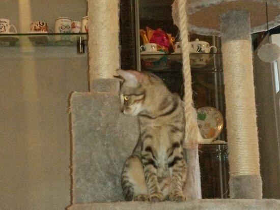Naughty Little Cat Shop