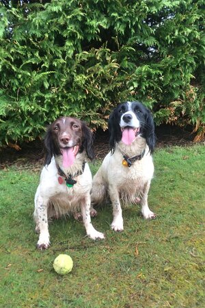 We love your dogs at Little Trevothan, and have two exercise areas.