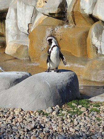 Moseley, Wirginia: Penguin enclosure