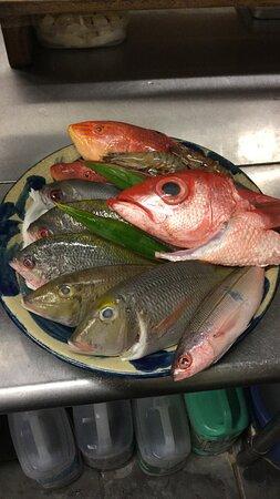 日替わり県産魚