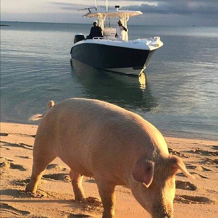 Pig beach @pig village