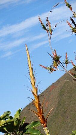 Dumbea, New Caledonia: ‿๑🌼 Ⓕ Ⓛ Ⓞ Ⓡ Ⓐ & Ⓕ Ⓐ Ⓤ Ⓝ Ⓐ ‿๑🌼 🄳🅉🅄🄼🄰🄲 🅁🄾🄰🄳 🌼*゚    𝘿𝙐𝙈𝘽𝙀𝘼 𝙍𝙚𝙜𝙞𝙤𝙣  ✿❈ 𝙉𝙀𝙒 𝘾𝘼𝙇𝙀𝘿𝙊𝙉𝙄𝘼𝙉  𝙇𝘼𝙉𝘿𝙎𝘾𝘼𝙋𝙀  🌼*゚