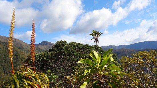 Dumbea, New Caledonia: ✿*゚🌱 FLORA&FAUNA ✿*゚🌱 🄳🅉🅄🄼🄰🄲 🅁🄾🄰🄳 ✿*゚    𝘿𝙐𝙈𝘽𝙀𝘼 𝙍𝙚𝙜𝙞𝙤𝙣  ✿❈ 𝙉𝙀𝙒 𝘾𝘼𝙇𝙀𝘿𝙊𝙉𝙄𝘼𝙉  𝙇𝘼𝙉𝘿𝙎𝘾𝘼𝙋𝙀  ✿*゚