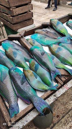 Targ rybny - Dahar