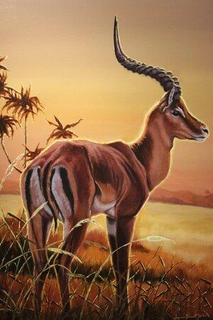 An Antilope