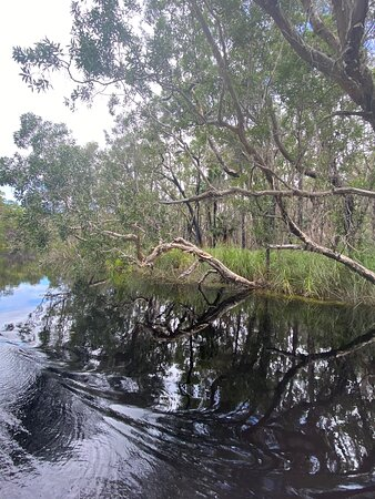 Awesome day exploring the Everglades