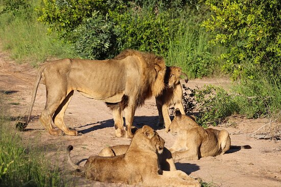 Avoca male and cubs