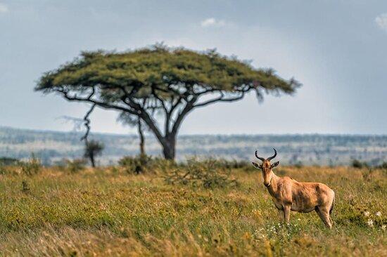 Tanzania safari (4-day) Image